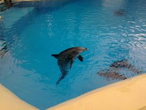 Dlphins